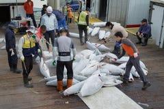 Sorting of hulks of a frozen tuna. Busan, South Korea – September 22th, 2016: Busan, fish port, sorting of hulks of a frozen tuna stock image