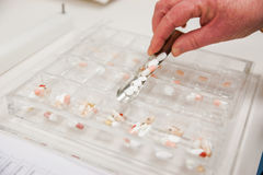 Sorting Medications for patient`s at a pharmacy. Or hospital Stock Image