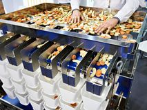 Sorting and packing machine of sliced fruits vegetables. Sorting and packing of sliced fruits and vegetables and hand royalty free stock photography