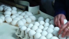 Sorting process in eggs chicken farm stock footage