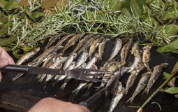 Sorting sardines, Mackerel fishes with potatoes on with potatoes grill plate Stock Photo