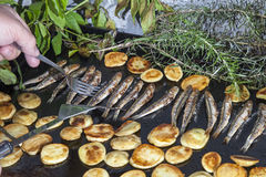 Sorting sardines, Mackerel fishes with potatoes on with potatoes grill plate. Sorting fresh Mediterranean sardines, mackerel fishes and sliced organic potatoes royalty free stock photos