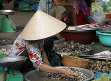 Sorting the shells. Vendor at a market in vietnam sorting through her shells Stock Image