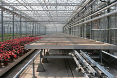 Sorting table. Greenhouse with a sorting table for the fowers royalty free stock images