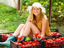Sorting Tomatoes. Young gardener sorting the beautiful harvested tomatoes Royalty Free Stock Image