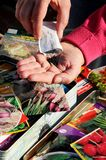 Sorting vegetable seeds for sowing. Stock Photos