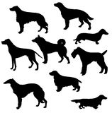 Sorts hunt dogs. Silhouettes of the sorts hunt dogs on white background stock illustration