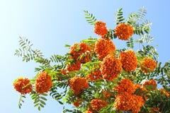 Sorvas e céu ensolarado Imagem de Stock