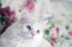 Sorveglianza bianca del gatto Immagine Stock Libera da Diritti