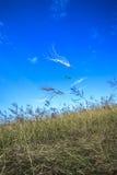 sorveglianza degli aquiloni nel cielo Fotografie Stock Libere da Diritti