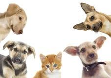 Sorveglianza del cucciolo e del gattino Fotografia Stock