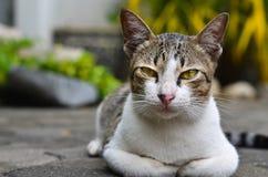 Sorveglianza del gatto Immagine Stock