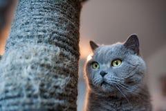 Sorveglianza del gatto Fotografie Stock