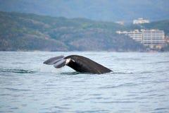 Sorveglianza della balena Fotografia Stock Libera da Diritti