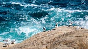 Sorveglianza delle onde Immagini Stock Libere da Diritti