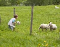 Sorveglianza delle pecore del bambino Fotografia Stock Libera da Diritti