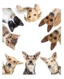 Sorveglianza divertente del cane fotografia stock libera da diritti
