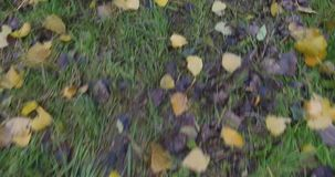 Sorvolando le foglie colorate autunno si chiudono su archivi video