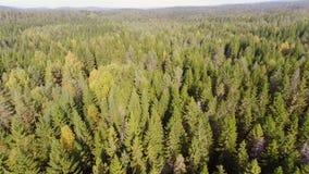 Sorvolare foresta archivi video