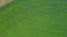 Sorvolare il campo verde aereo video d archivio