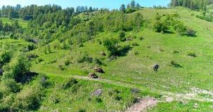 Sorvolare il gregge delle mucche che pascono sul campo verde nel giorno di estate nelle alpi di Europena Le nuvole sul cielo blu  stock footage