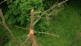 Sorvolare le cime degli alberi forestali archivi video