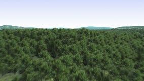 Sorvolare una foresta stock footage