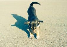 Sorvos do cão pequeno no asfalto foto de stock