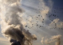 SOS signal. A flock of birds lined up in the SOS signal on the background of factory smoke Royalty Free Stock Images