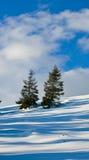 sosen drzewa dwa Obraz Royalty Free