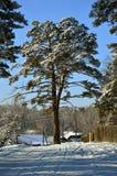 Sosna blisko domu Na tle niebieskie niebo odchodowy zdjęcie royalty free