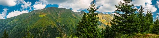 Sosna i góry Zdjęcie Stock