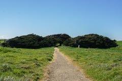 Sosna i inni drzewa przy skłonu punktem w Nowa Zelandia obraz stock
