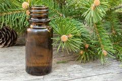 Sosna istotny olej w małej brąz butelki, sosny gałąź z zielenią i pączkuje na zmroku stole fotografia royalty free