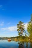 Sosna jeziorem przy rankiem obraz royalty free