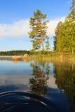Sosna jeziorem przy rankiem obrazy stock