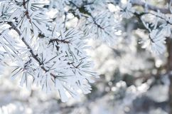 Sosna kapuje z płatkami śniegu, zimy tło, zakończenie obraz royalty free