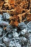 Sosna konusuje i suszący kwiaty Zdjęcie Stock