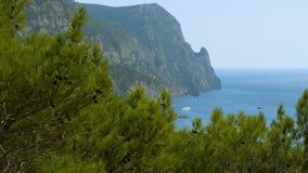 Sosna krajobraz morzem zdjęcie wideo