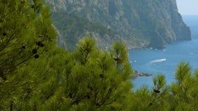 Sosna krajobraz morzem zbiory