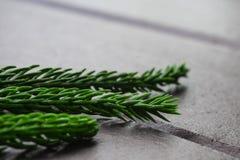 Sosna liście na drewnianym tle Obraz Stock