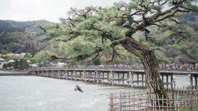 Sosna przy brzeg rzeki i gołąbki lataniem Obraz Royalty Free