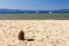 Sosna rożek na Pustej plaży Obrazy Stock