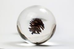 Sosna rożek przez kryształowej kuli Zdjęcia Royalty Free