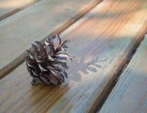 Sosna rożek w zmierzchu świetle Fotografia Royalty Free