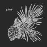 Sosna rożek z igielna ręka rysującym liścia nakreśleniem ilustracja wektor