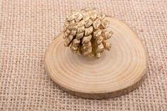 Sosna rożek sosna Obraz Royalty Free