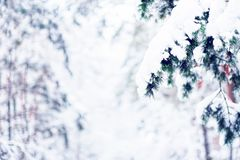 Sosna rozgałęzia się w zima krajobrazie obrazy stock