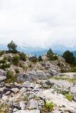 Sosna w górach Fotografia Stock