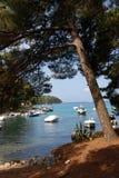 Sosna w Mali Losinj wyspie, Chorwacja Zdjęcia Royalty Free